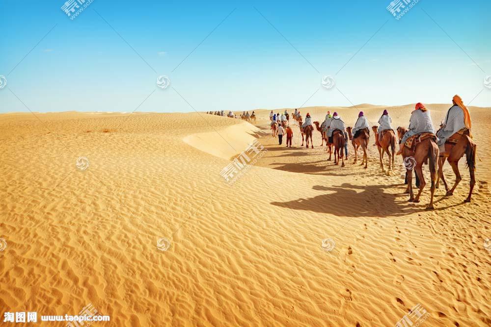 沙漠上的骆驼