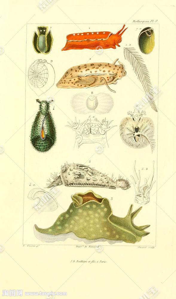 软体动物插画图片