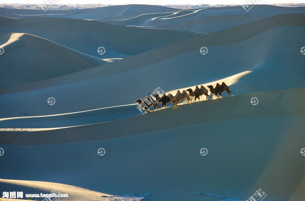 大漠骆驼队