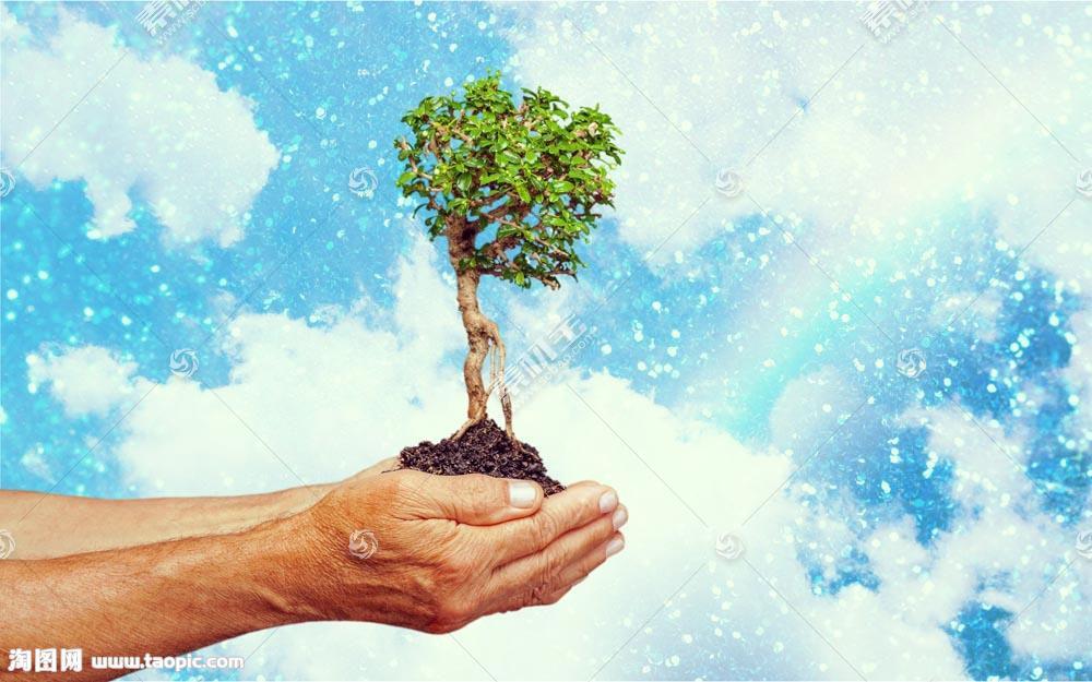手捧着的小树
