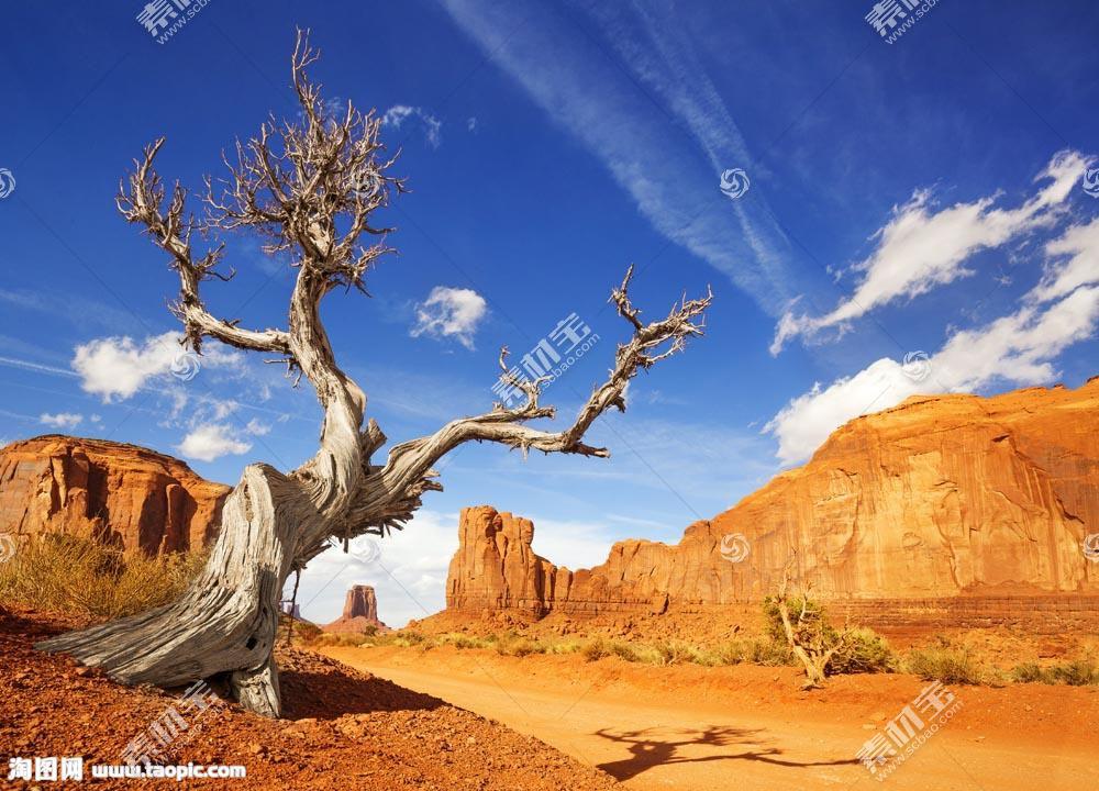 荒漠的枯树和石头