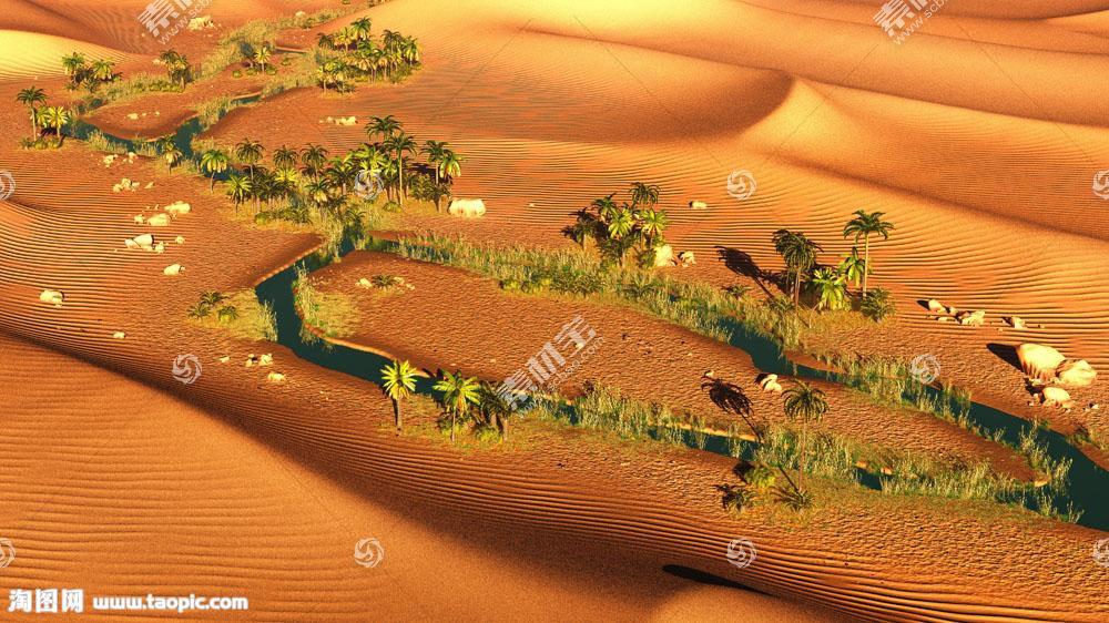 沙漠上的树木
