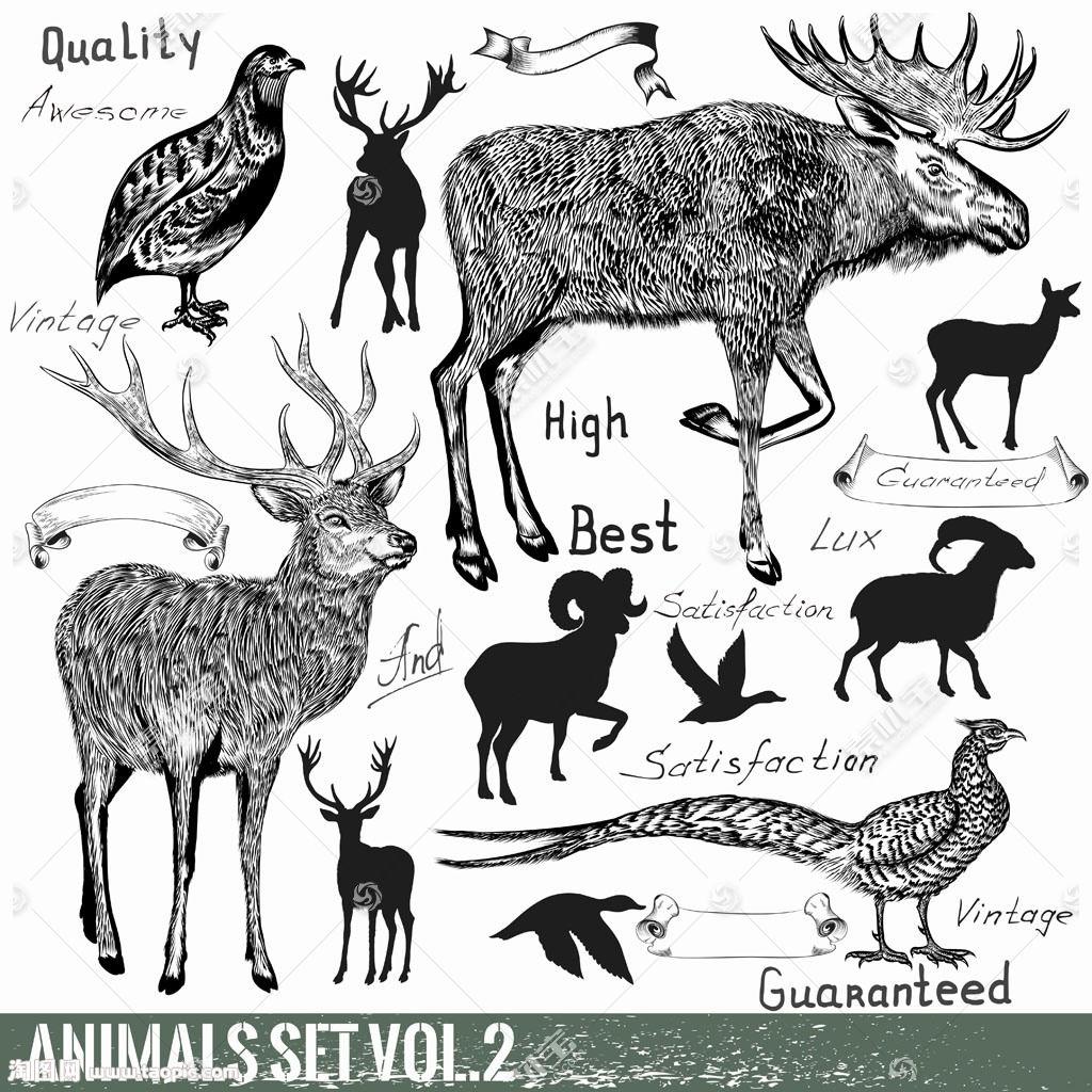 动物剪影与动物插画图片