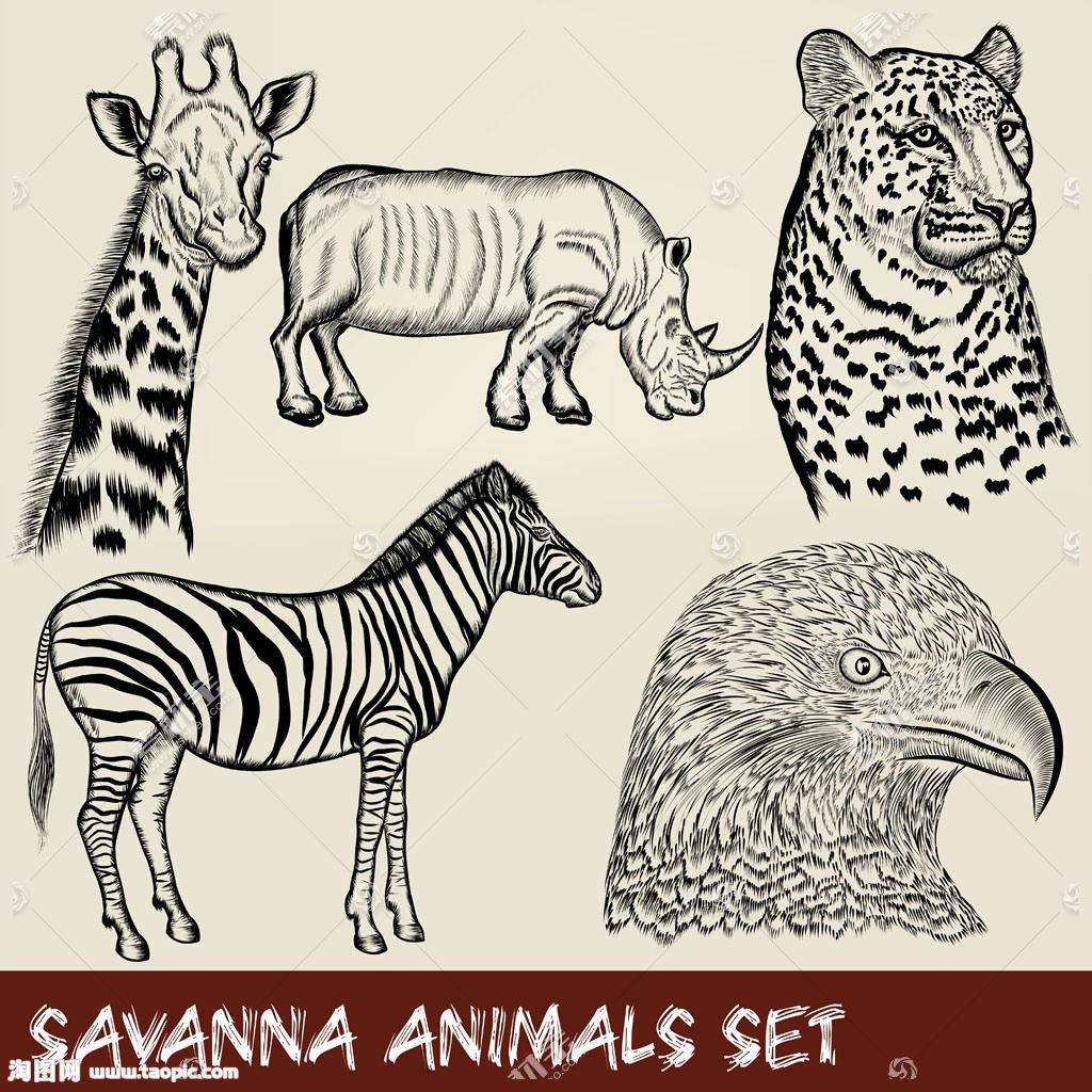 雄鹰与哺乳动物插画图片