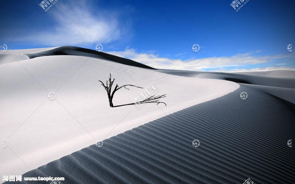 沙漠上小树风光