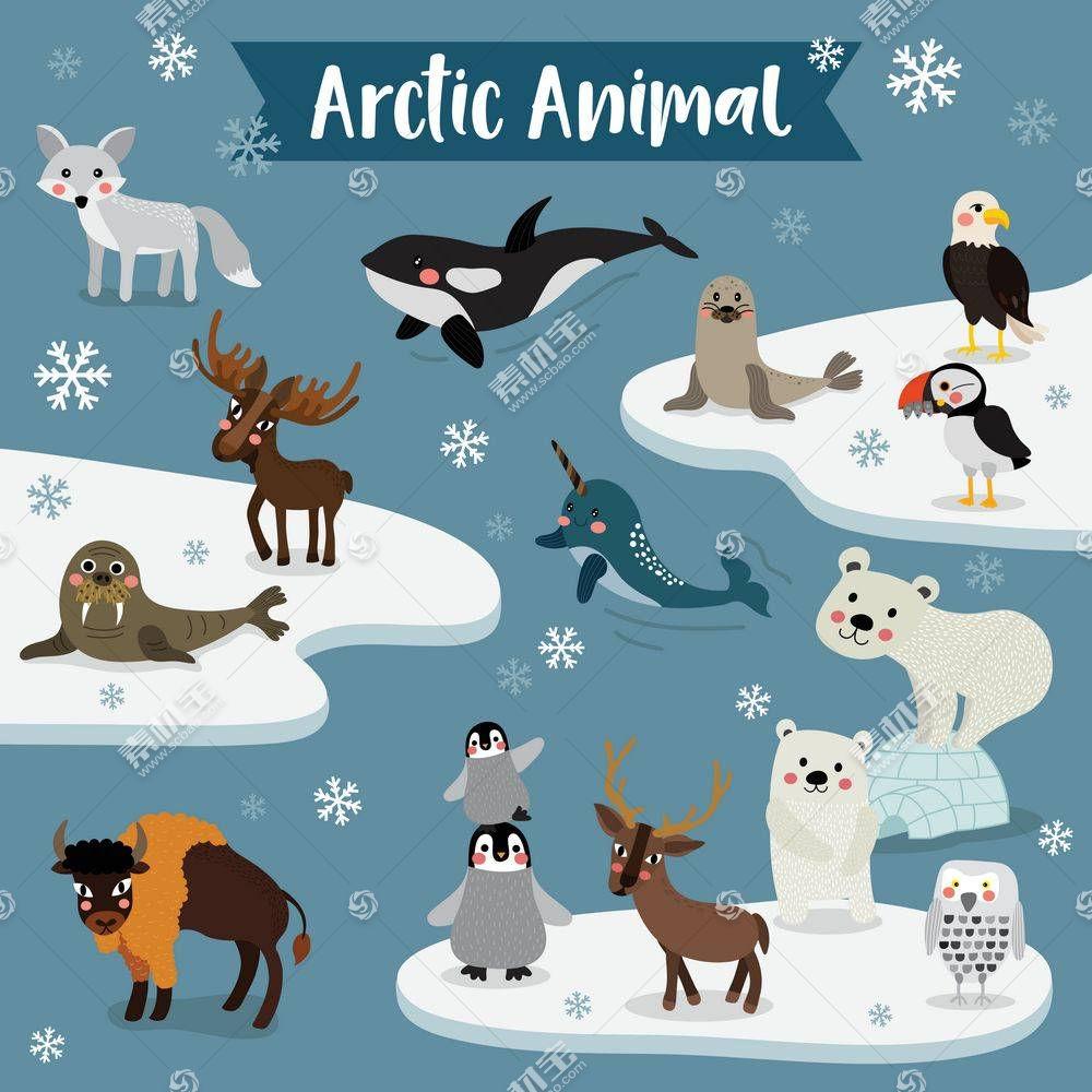 北极南极小动物图片